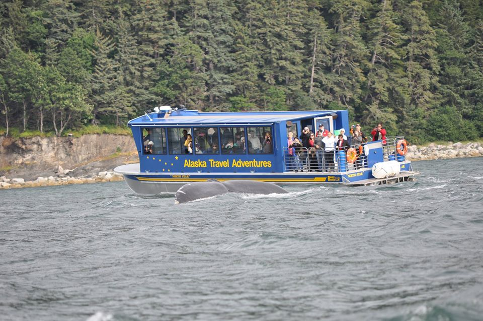 46′ Triple Diesel Whale Watching Tour Boat